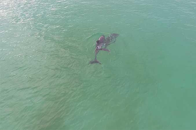 Dolphin Express Panama City Beach
